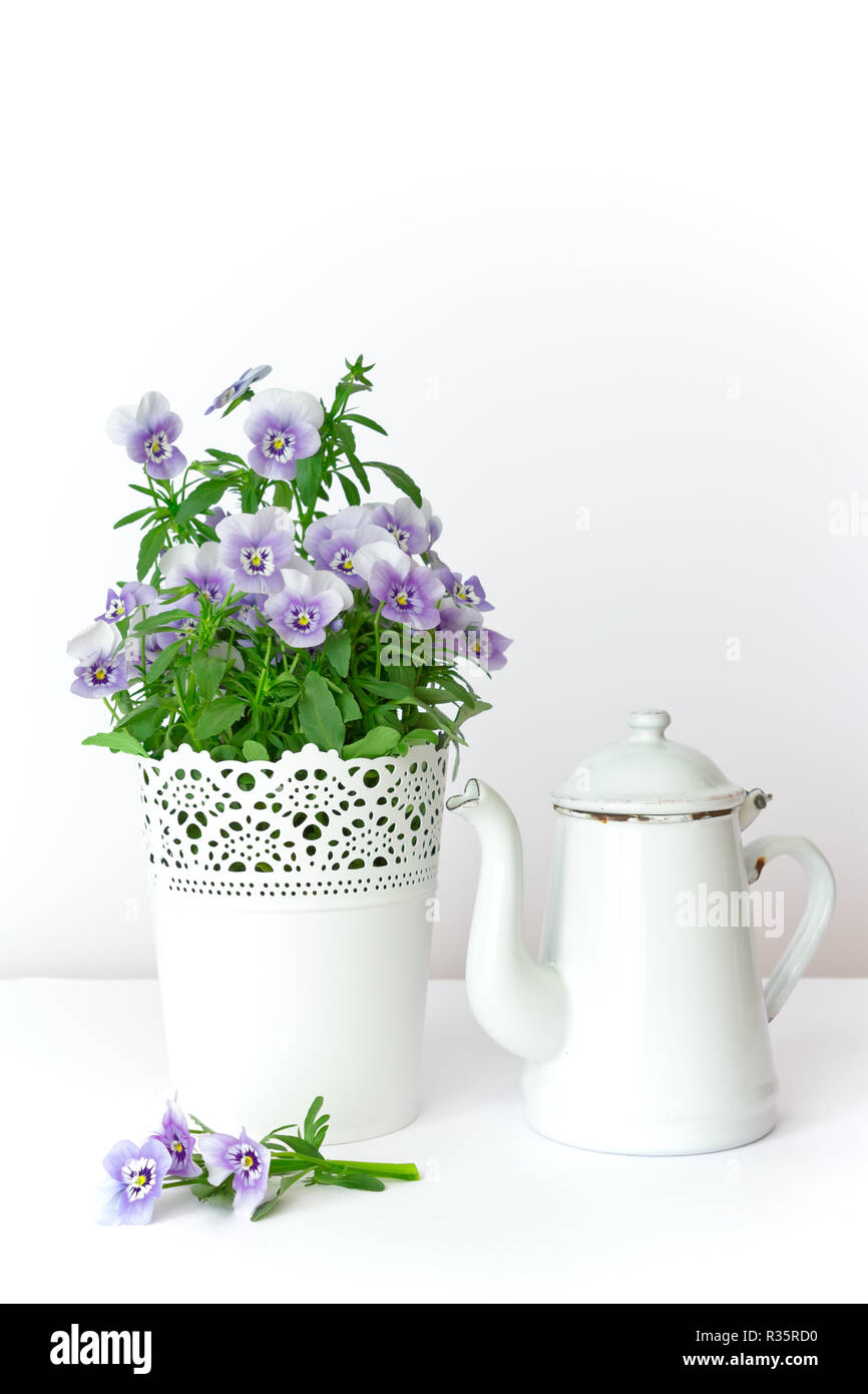 Purple, blue and lilac pansy flowers in a beautiful pot with a vintage enamel jug on white background, copy or text space Stock Photo