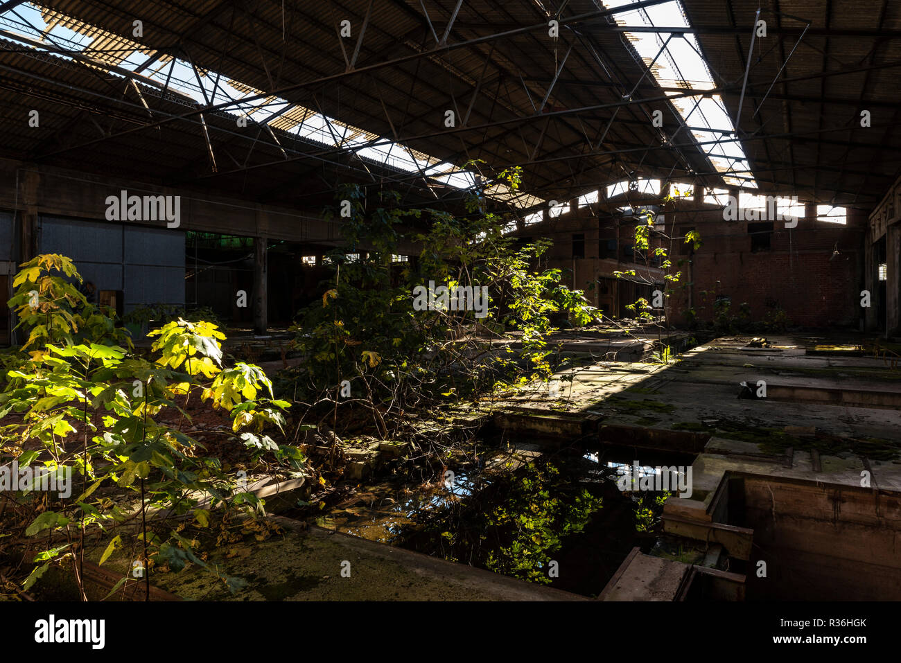 spontaneous natural growth in abandoned factory - Stock Image