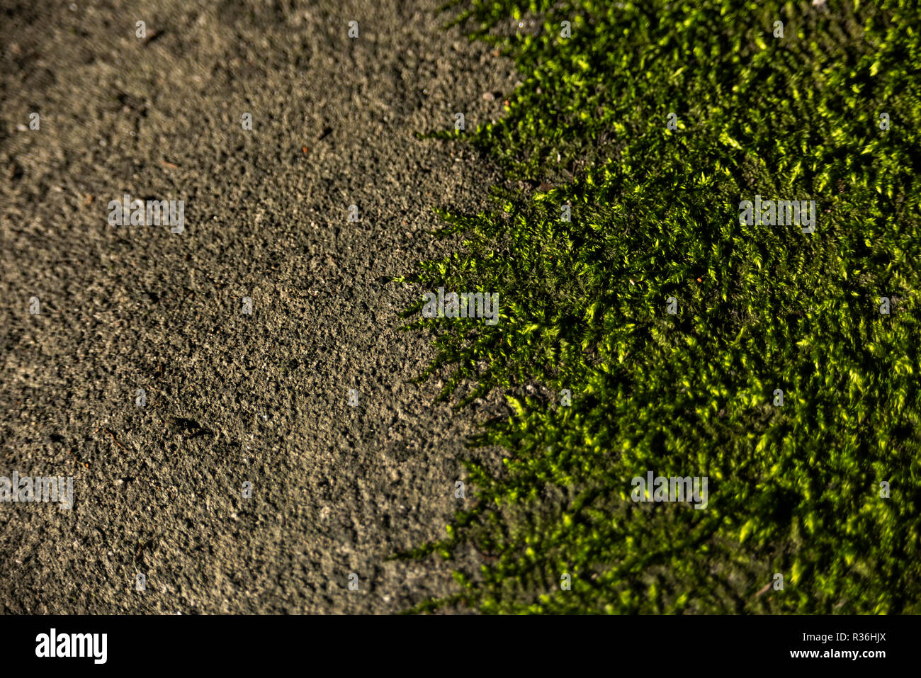 spontaneous growth of moss on concrete - Stock Image