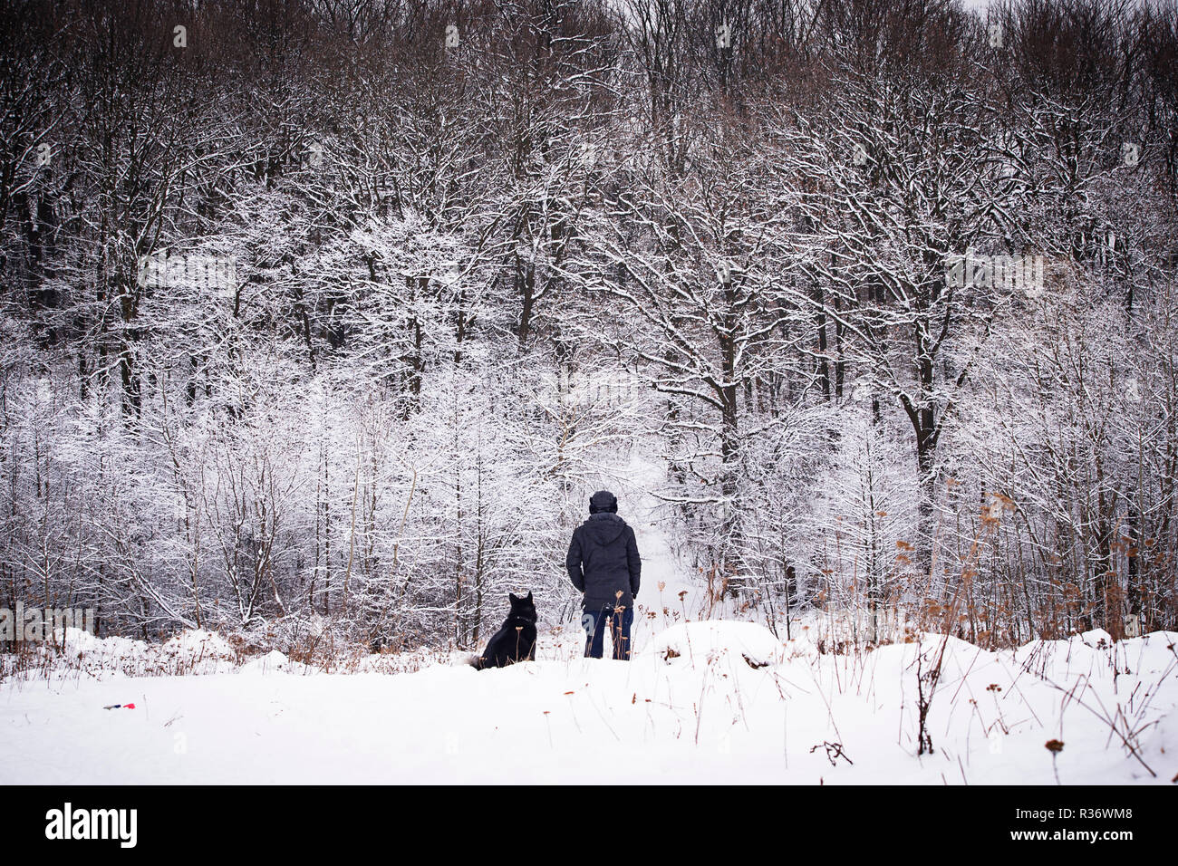 Man walking with his dog in winter forest - Stock Image