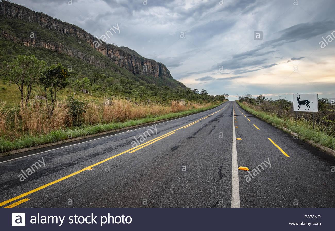 Avoiding roadkills, Chapada dos Veadeiros, Goias, Brazil - Stock Image