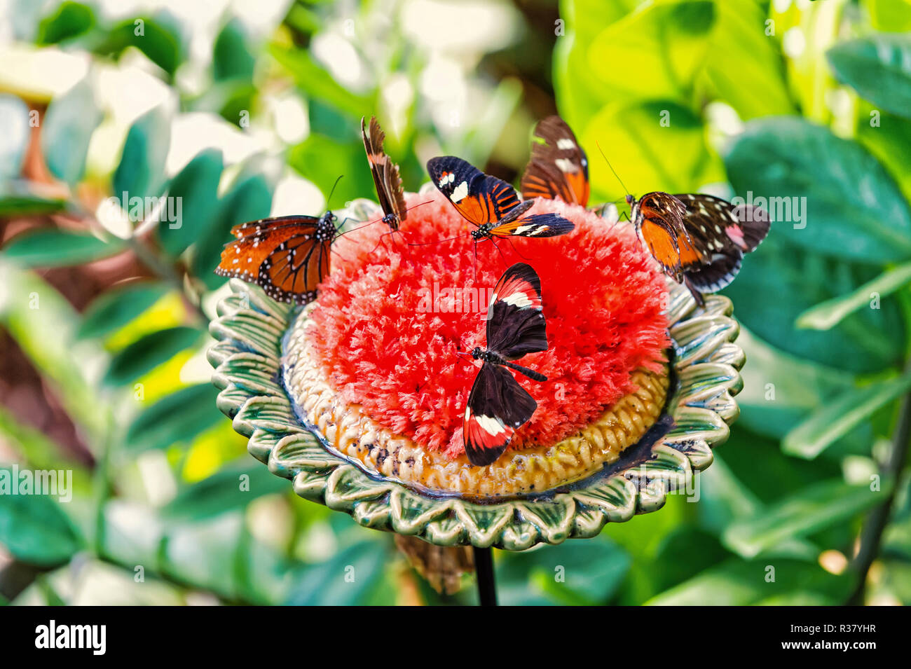 Butterflies or cute insects with brightly colored wings feeding nectar from large blossoming flower with green leaves on sunny summer day on natural background. Beauty of nature. Wildlife - Stock Image