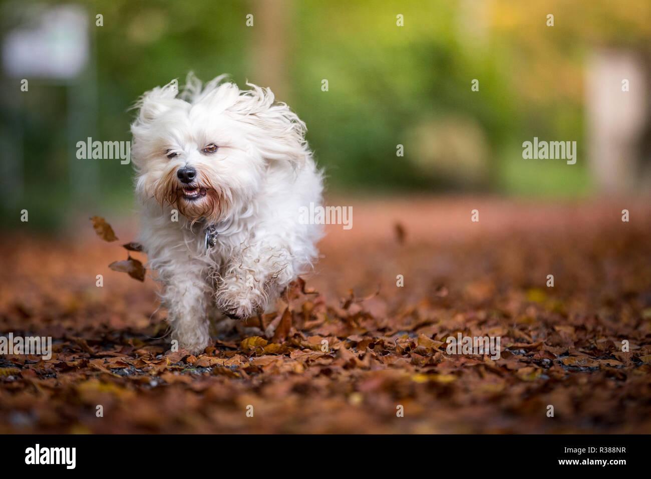small autumn storm Stock Photo
