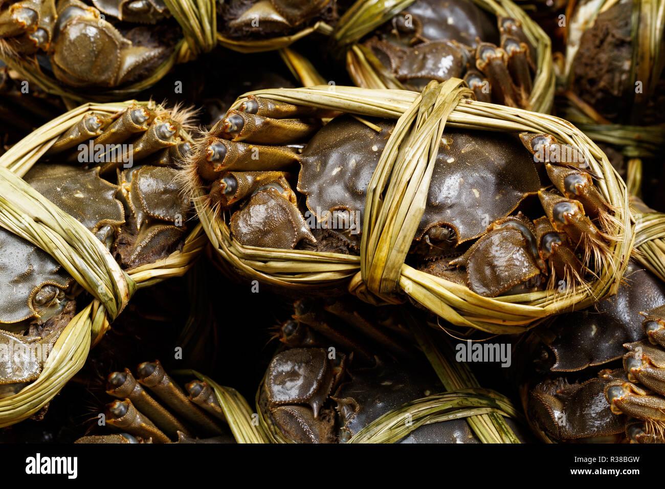 Shanghai Hairy Crab Stock Photos Shanghai Hairy Crab Stock