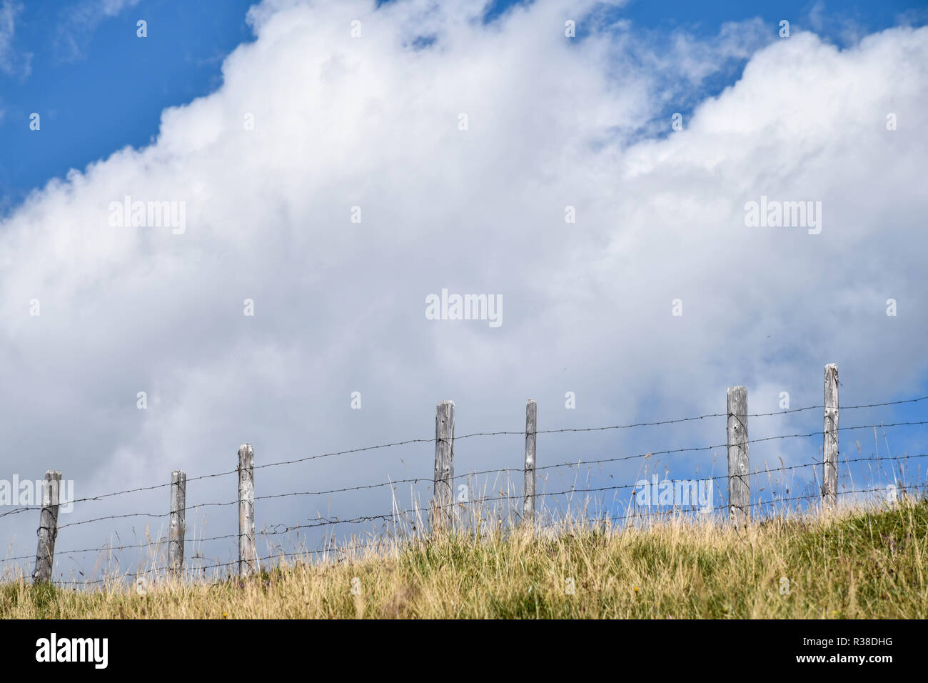 Barbwire fence in a yellow grass field, contrasting against clouds in the blue sky - Stock Image