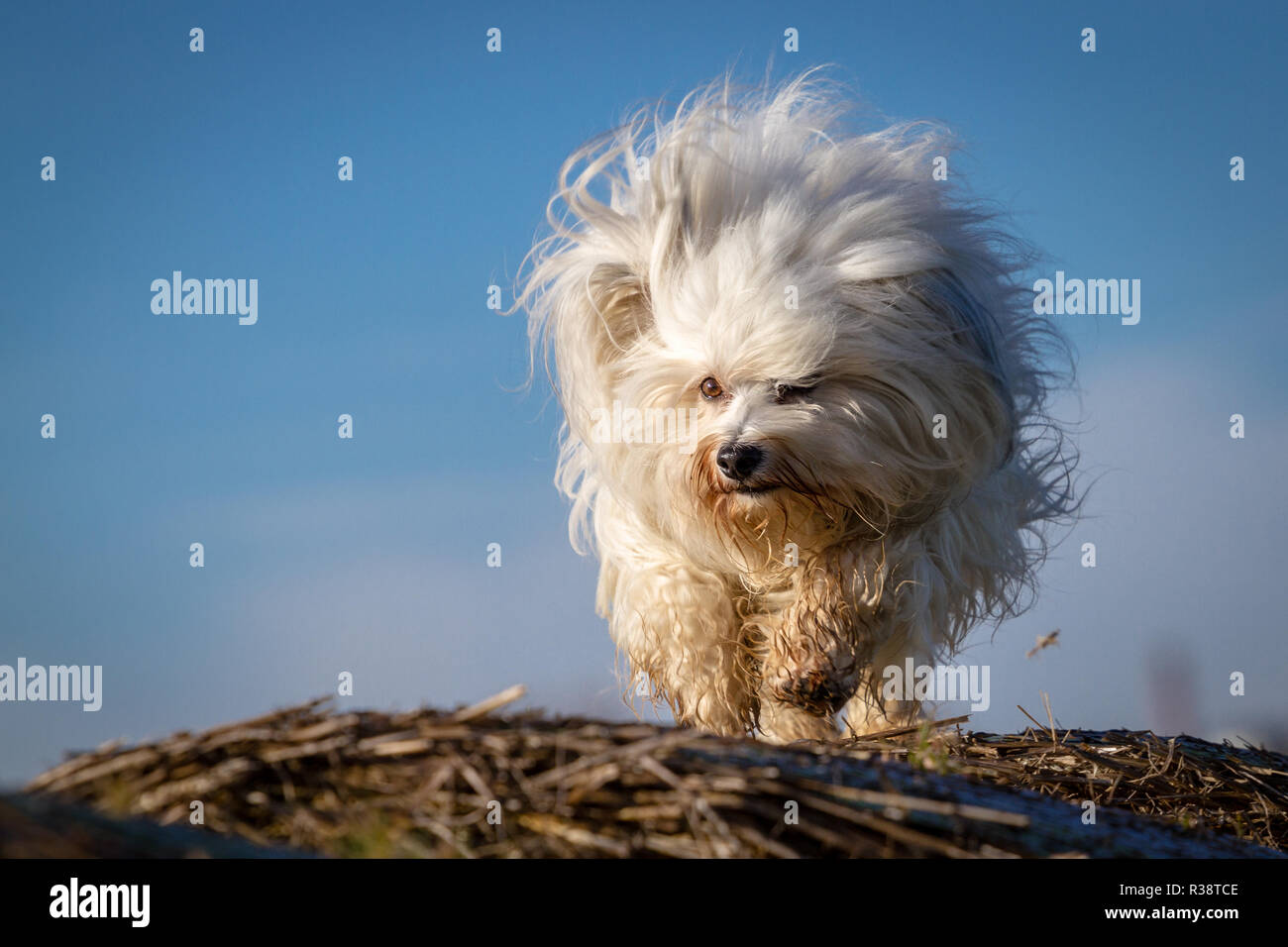 fur ball Stock Photo