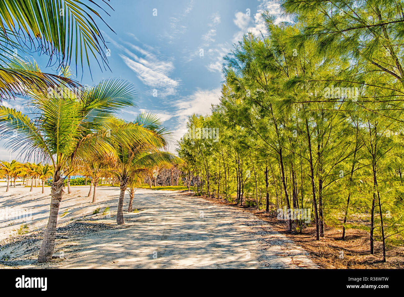 Tropical Landscape Of Palms And Trees On White Sand Path Way Or