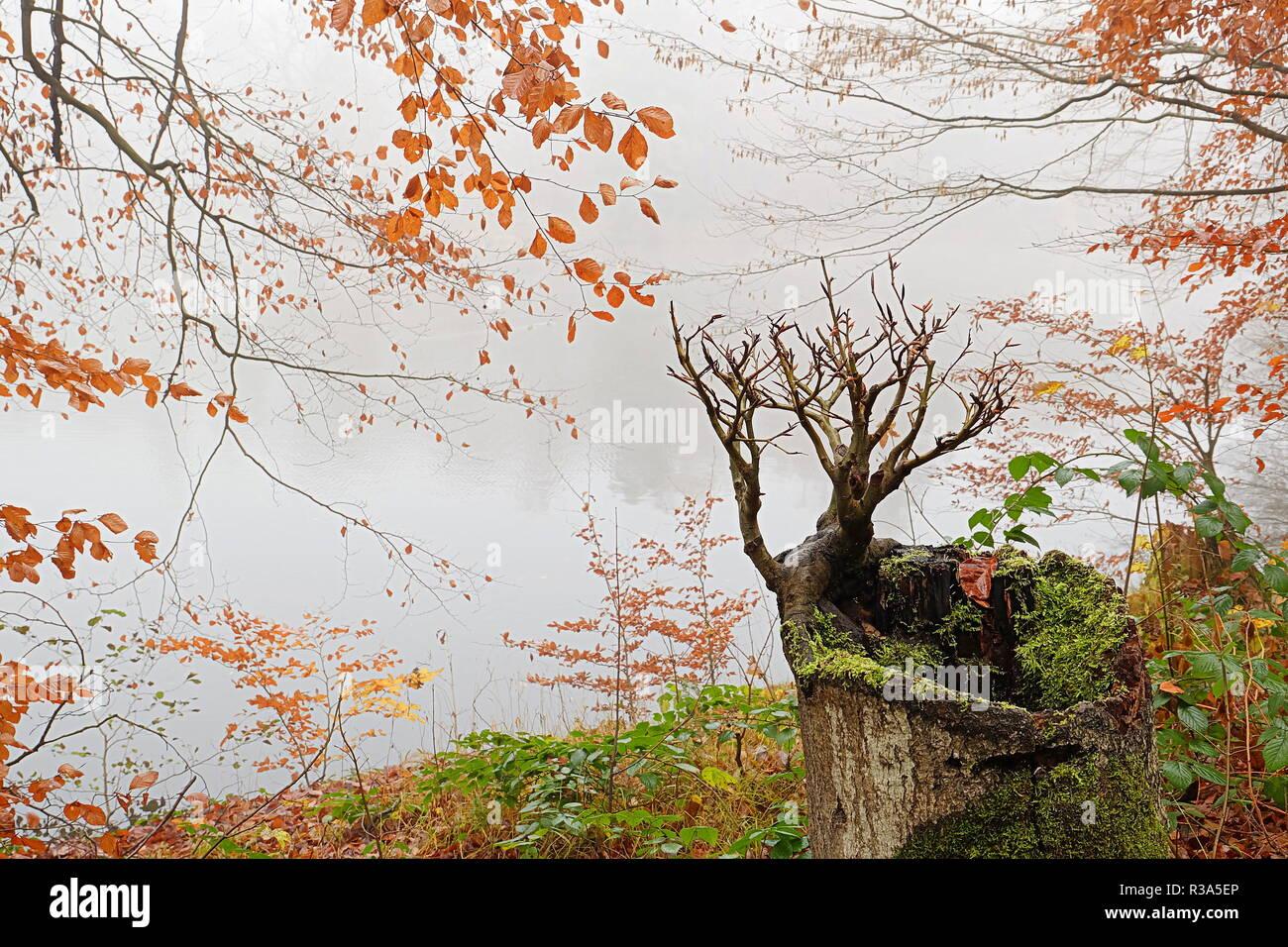 novemberblues Stock Photo