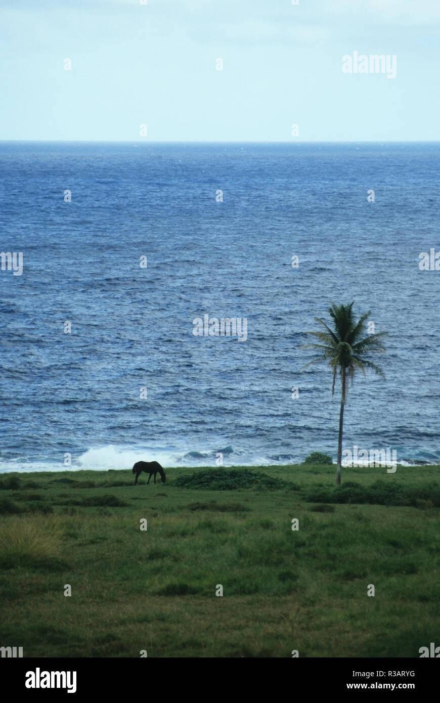 Dating maui hawaii