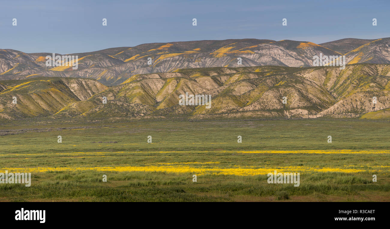 USA, California. Yellow wildflowers color plain and mountains. - Stock Image