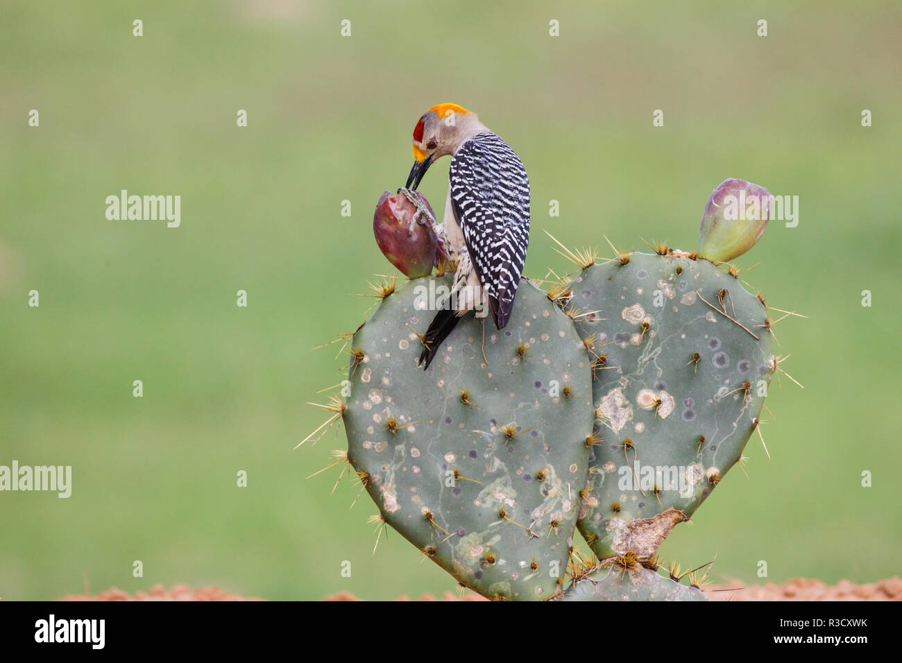 Larry Bird Stock Photos & Larry Bird Stock Images - Page 2