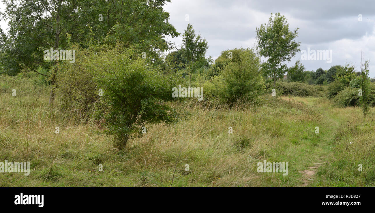 Four seasons in Horley No.1 Summer - Stock Image