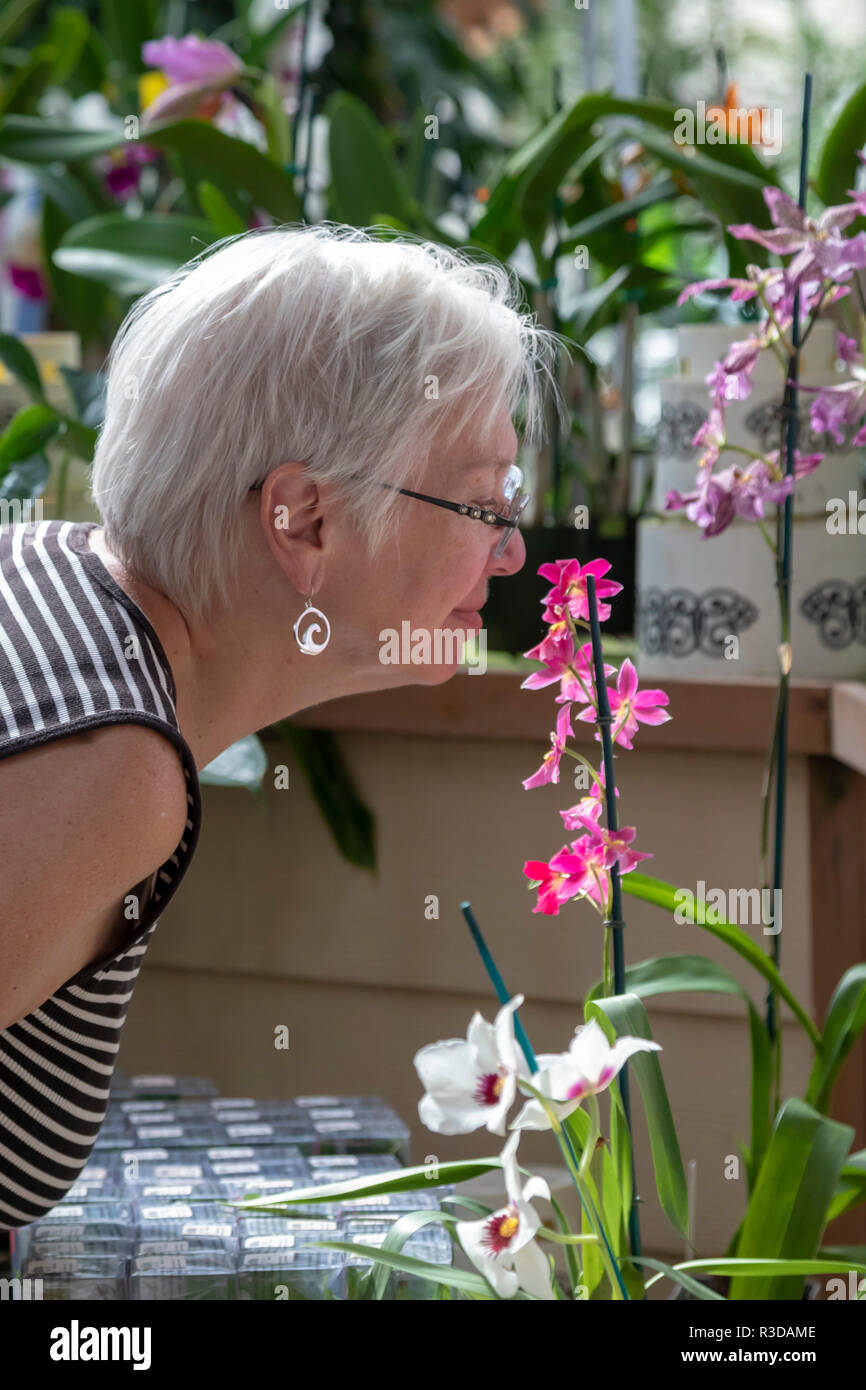 Volcano, Hawaii - A visitor inspects an orchid at Akatsuka Orchid Gardens on Hawaii's Big Island. The orchid nursery is a family business, started in  - Stock Image