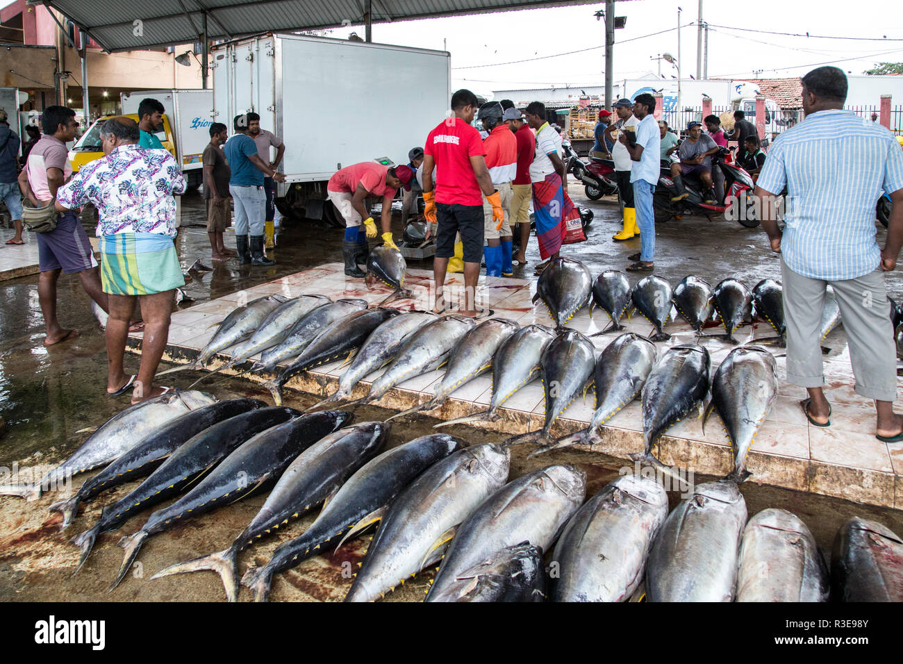 Fish Buyers Stock Photos & Fish Buyers Stock Images - Alamy