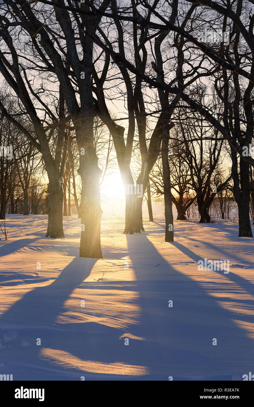 Sun shining through the winter trees casting long shadows. - Stock Image