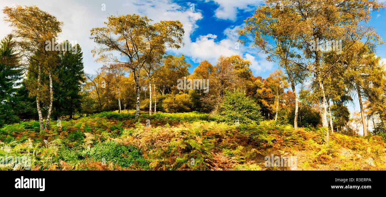 shades of colors in the forest in the fall with the fern plants in the foreground - Stock Image