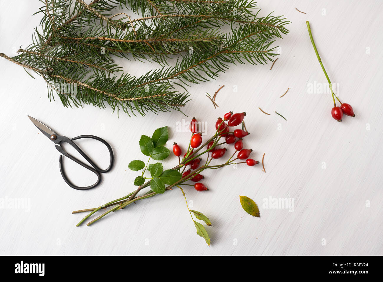 preparing natural christmas decoration with rose hips, fir branches and scissors on a white painted table with copy space, high angel view from above, - Stock Image