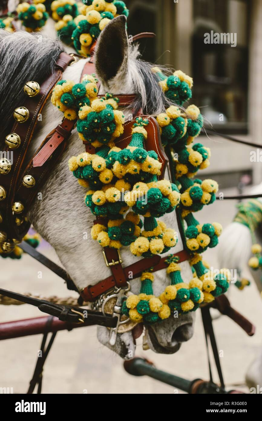 Head of Spanish race horses decorated with garlands. - Stock Image