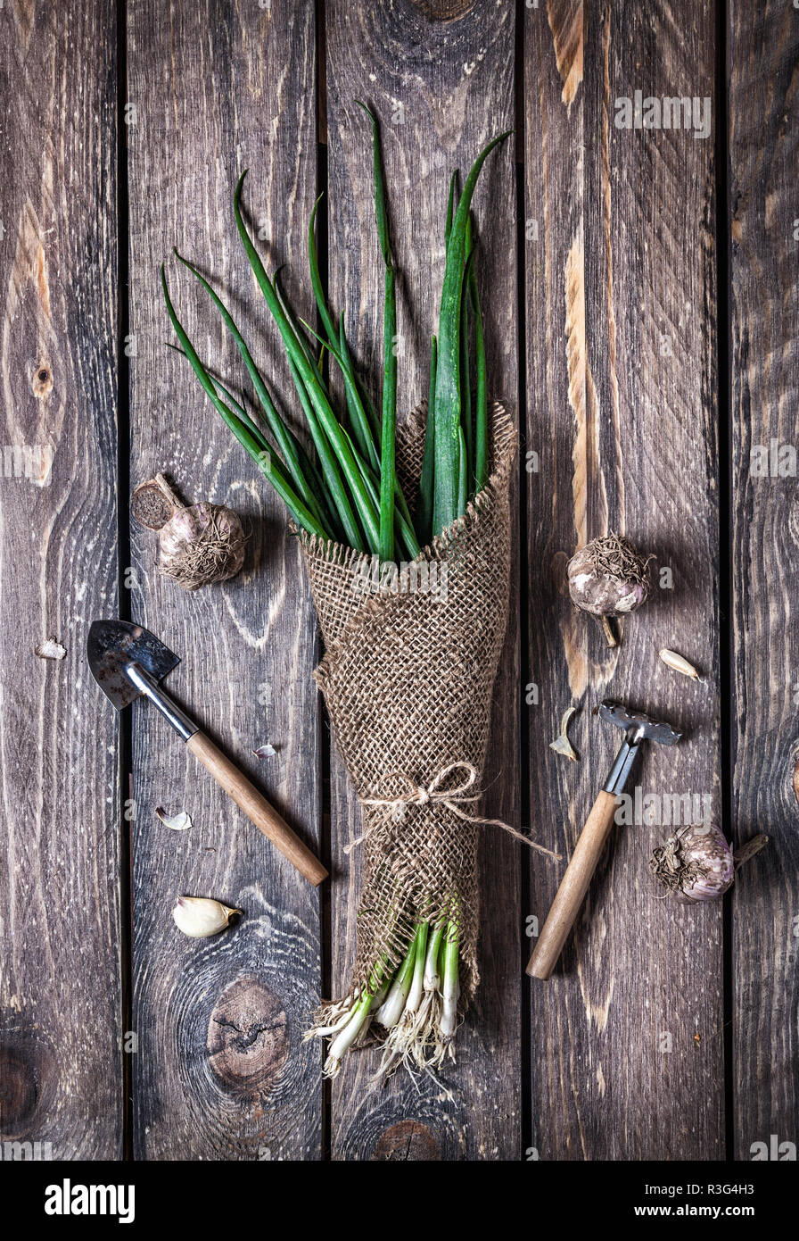 Raw green onion in sackcloth and garden tools nearby on wooden table Stock Photo