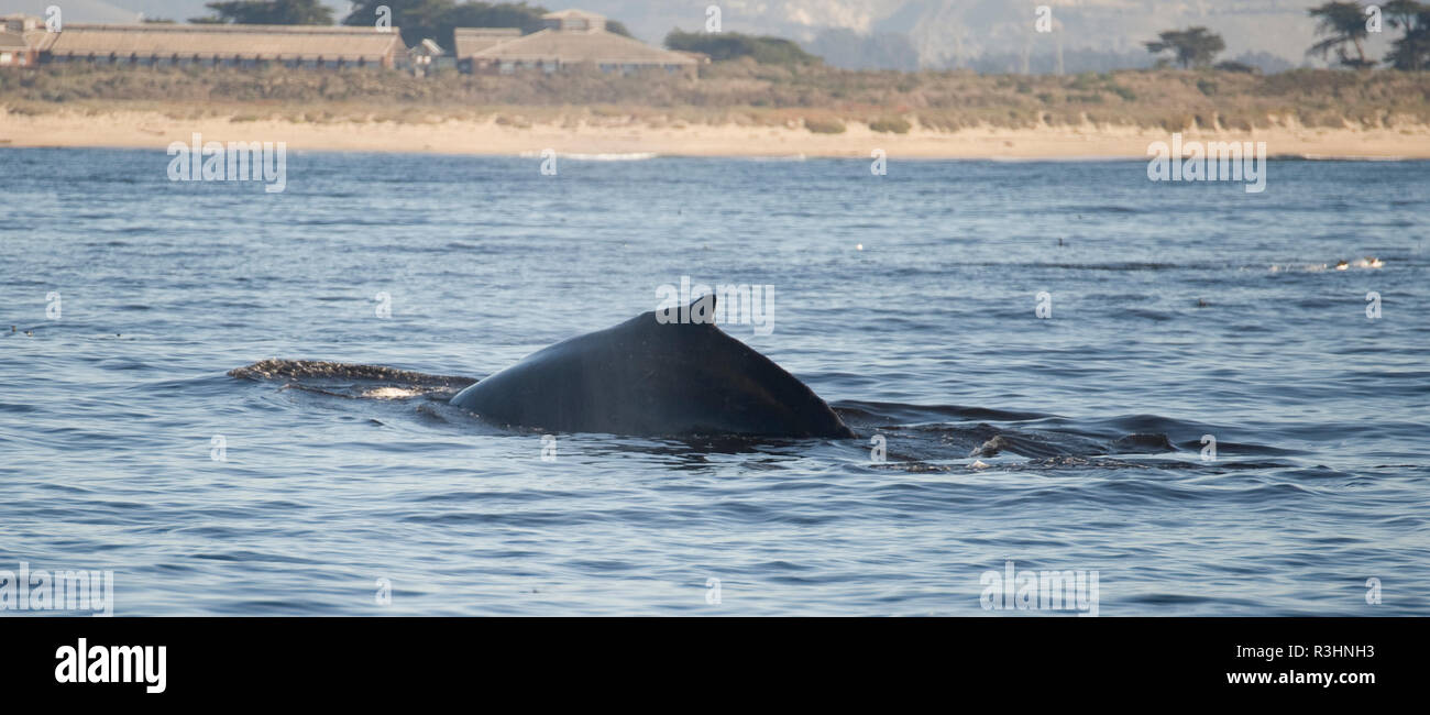 whales - Stock Image