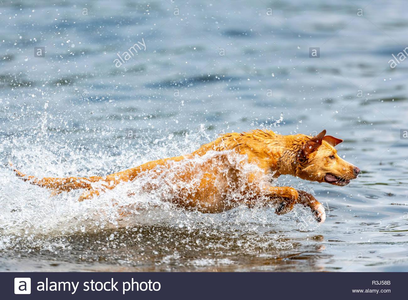 Hund spielt im Wasser - Stock Image