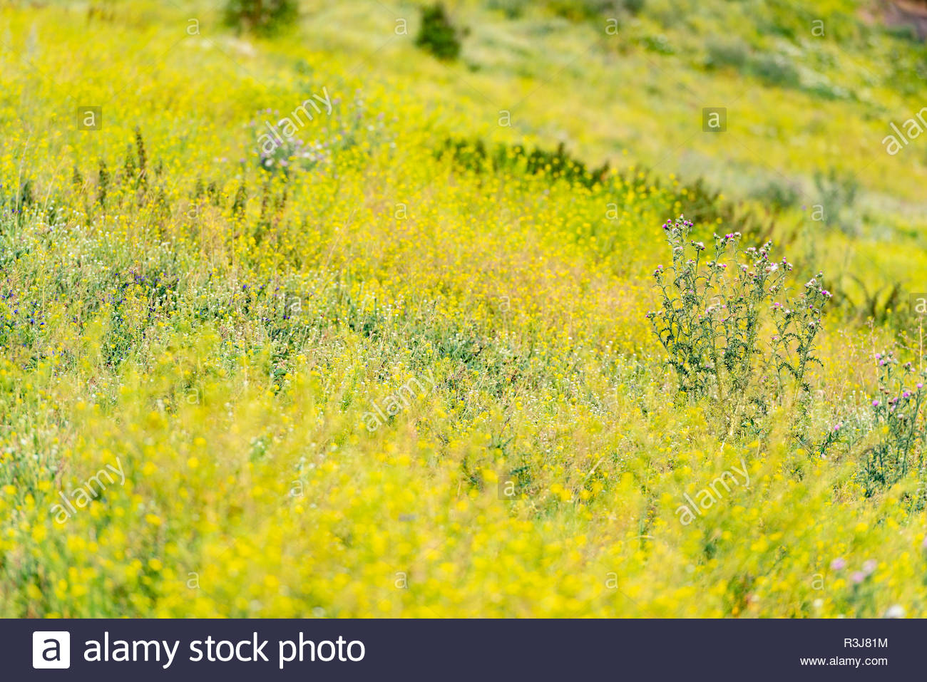 Wildwiese - Stock Image