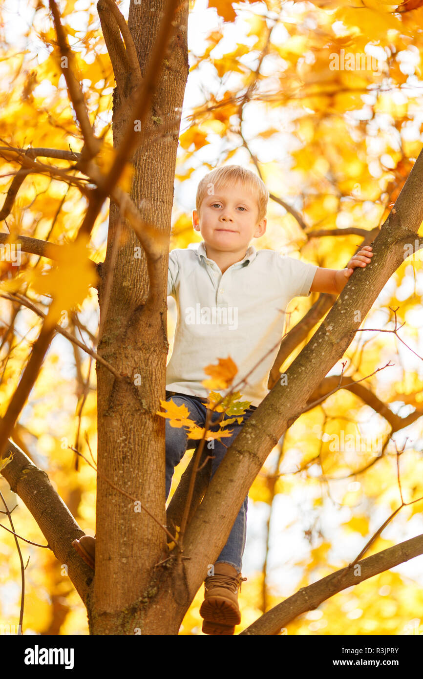Photo of small boy sitting on tree in autumn Stock Photo