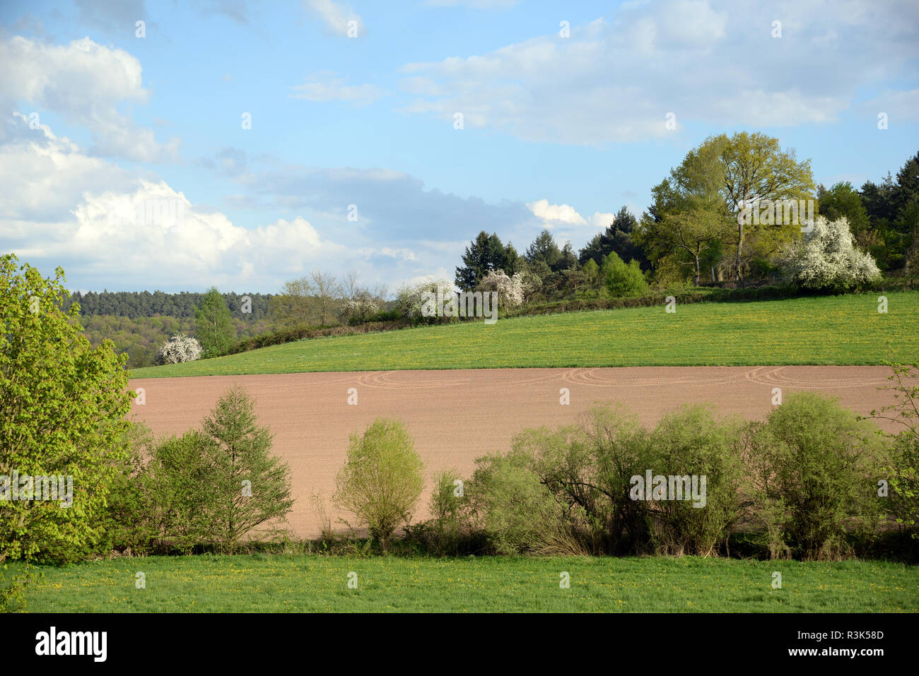 fields in the odenwald Stock Photo