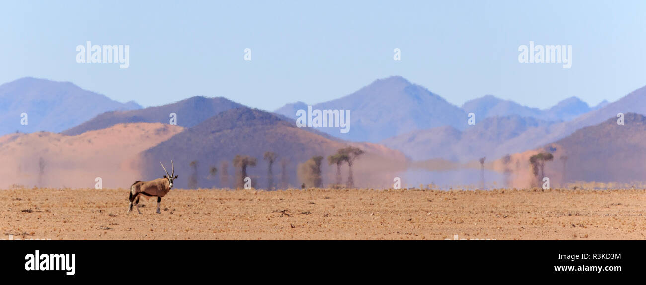 Africa, Namibia, Namib-Naukluft Park. Oryx in desert heat wave mirage. Credit as: Wendy Kaveney / Jaynes Gallery / DanitaDelimont.com - Stock Image