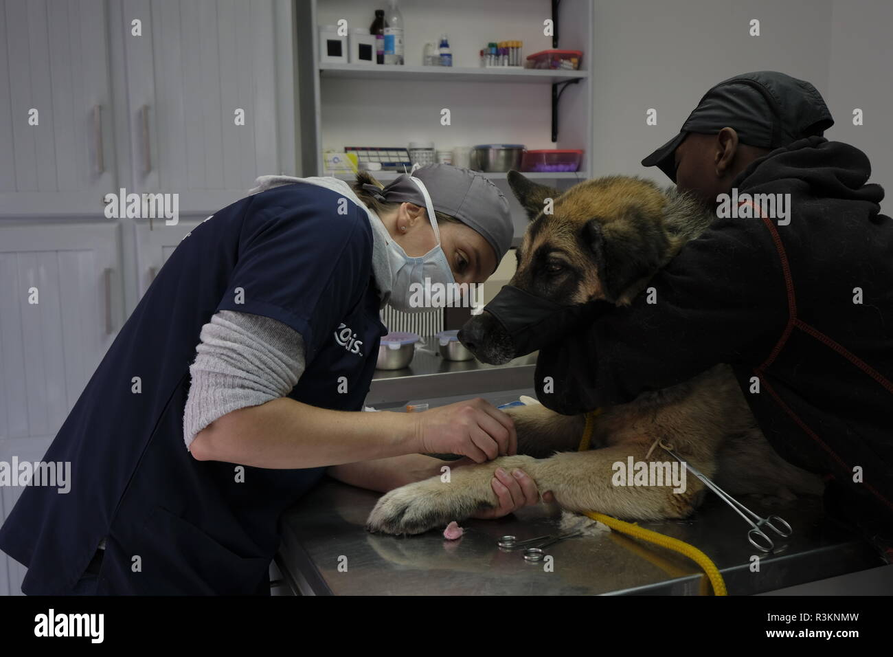 colour professional portrait of a veterinarian in practise - Stock Image
