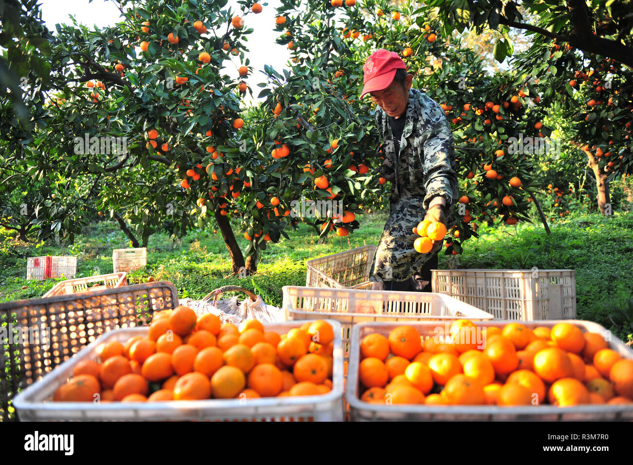 Harvesting Russia Stock Photos & Harvesting Russia Stock Images - Alamy