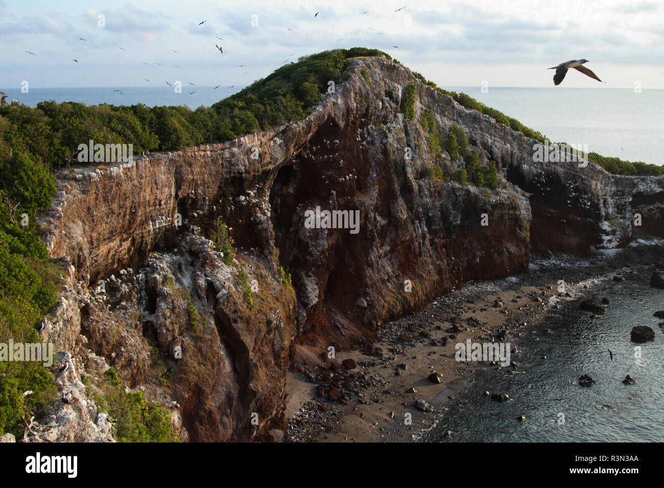 Blue-footed booby (Sula nebouxii) in flight over cliff, Isla Isabella, Nayarit, Mexico - Stock Image