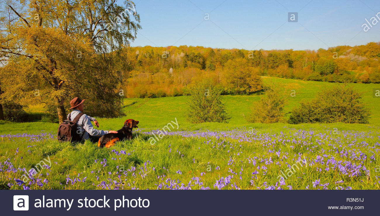 Walker and his dog (Canis familiaris) taking a sit break among Bluebell flowers (Hyacinthoides non-scripta) in a meadow on a hill, in spring, in April, in Picardie - France. - Stock Image