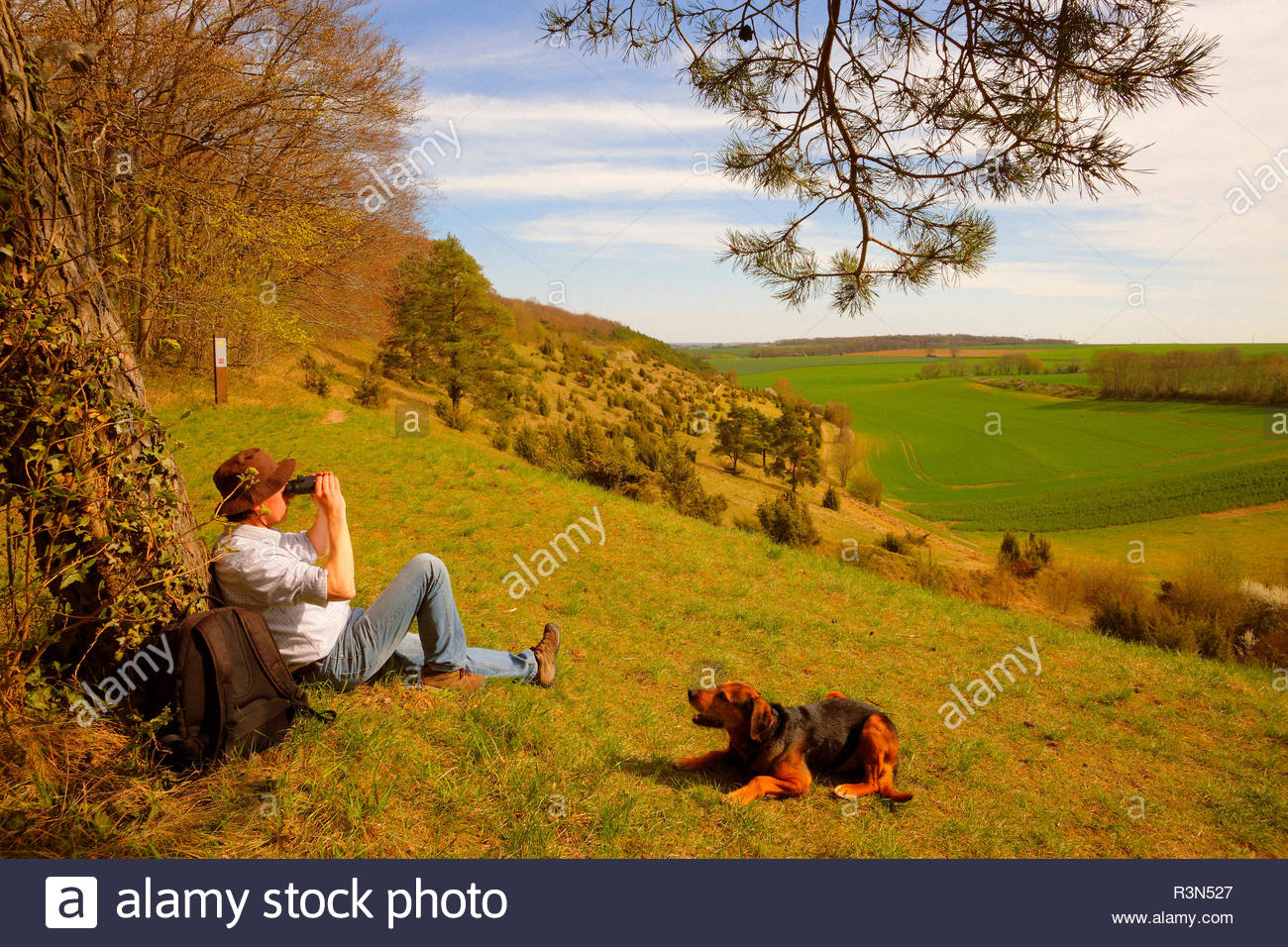 Walker and his dog (Canis familiaris) sitting under a pine tree (Pinus silvestris) to observe the landscape on the top of a hill strewn with juniper trees (Juniperus communis), in the spring, in April, in Picardy - La France. In the distance, there is a deer (Capreolus capreolus) coming out of a grove to cross a field. - Stock Image