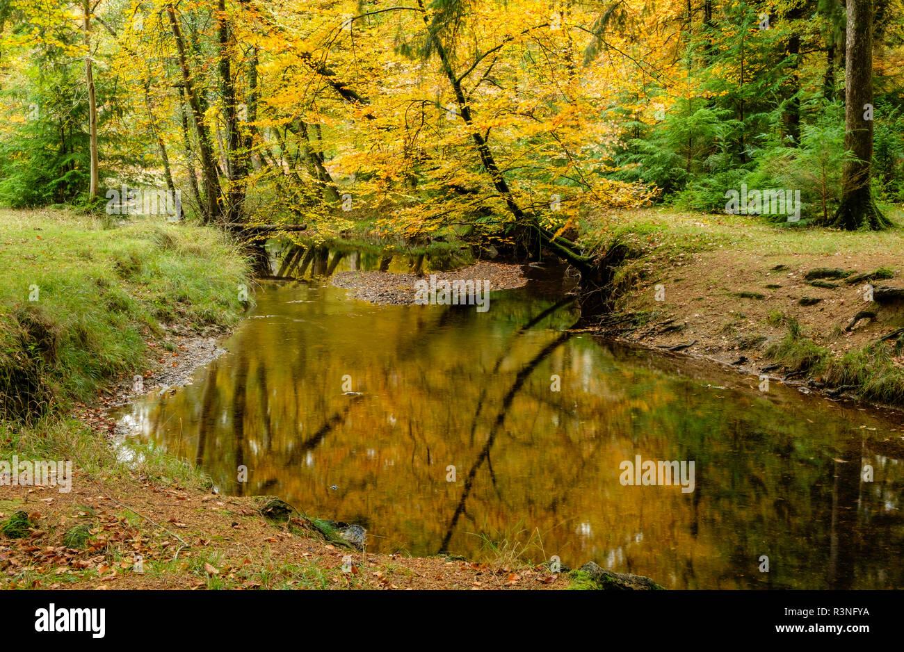 Blackwater River, New Forest National Park, Hampshire, England, UK, - Stock Image