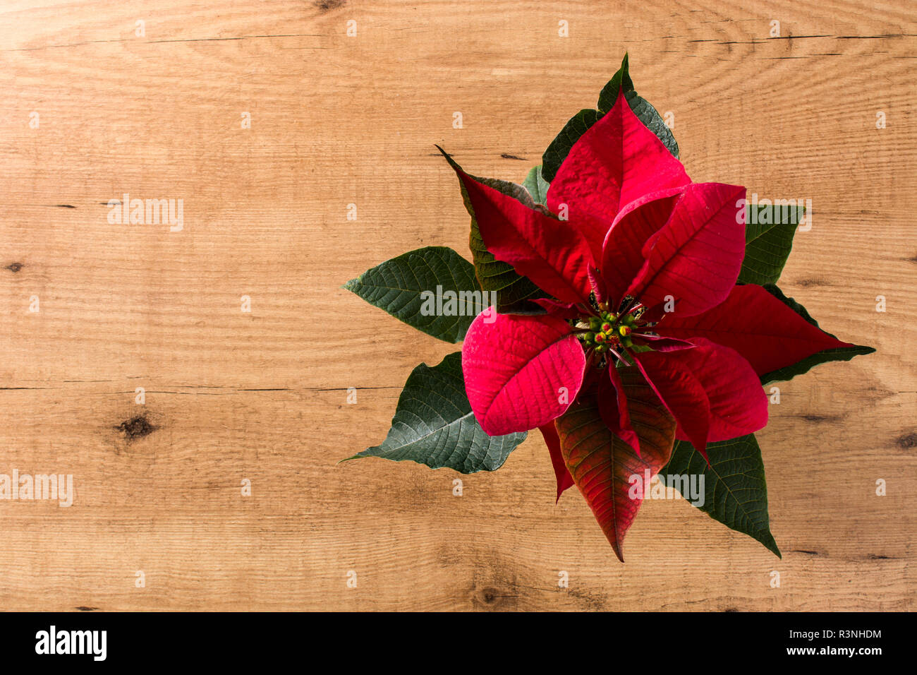 Christmas poinsettia flower on wooden table.Top view. Copyspace - Stock Image