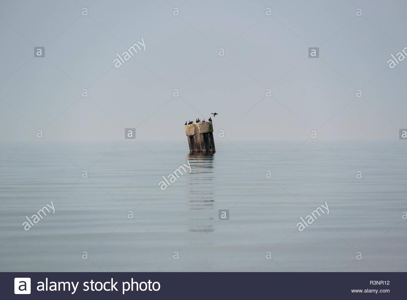 Kormorane auf einem Stahlträger in der See - Stock Image