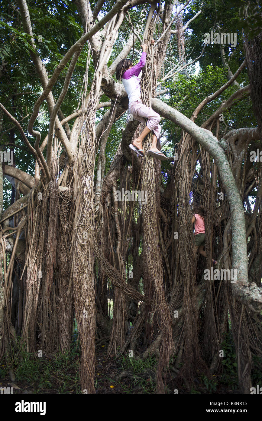 Child climbing the roots of a banyan tree (Ficus sp). New Caledonia. - Stock Image