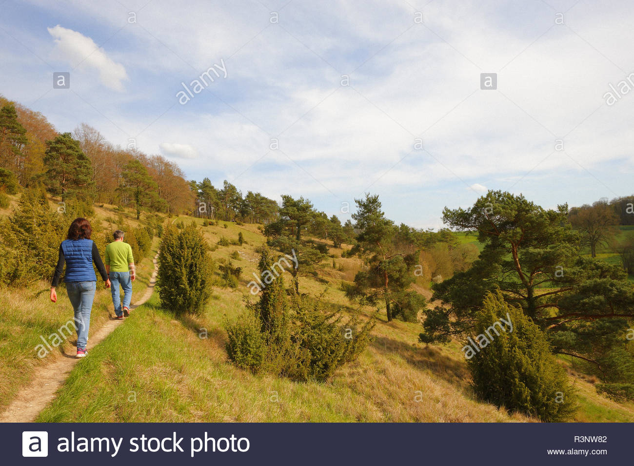 Couple of walkers walking on a path crossing a limestone hill strewn with Juniper (Juniperus communis) and Pine (Pinus silvestris), in spring, in April, Picardy, France. - Stock Image