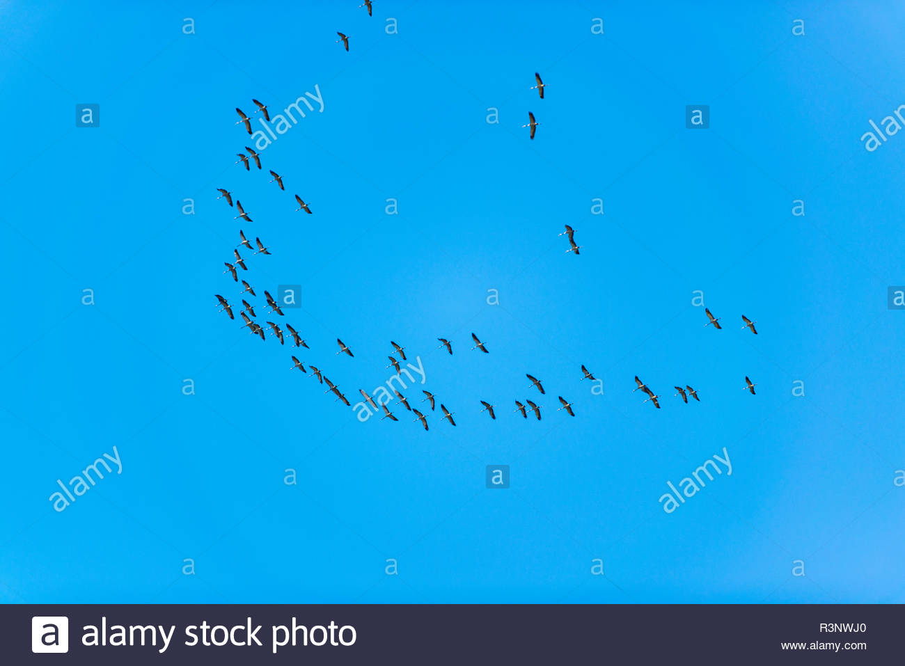 Zugvögel am blauen Himmel Stock Photo