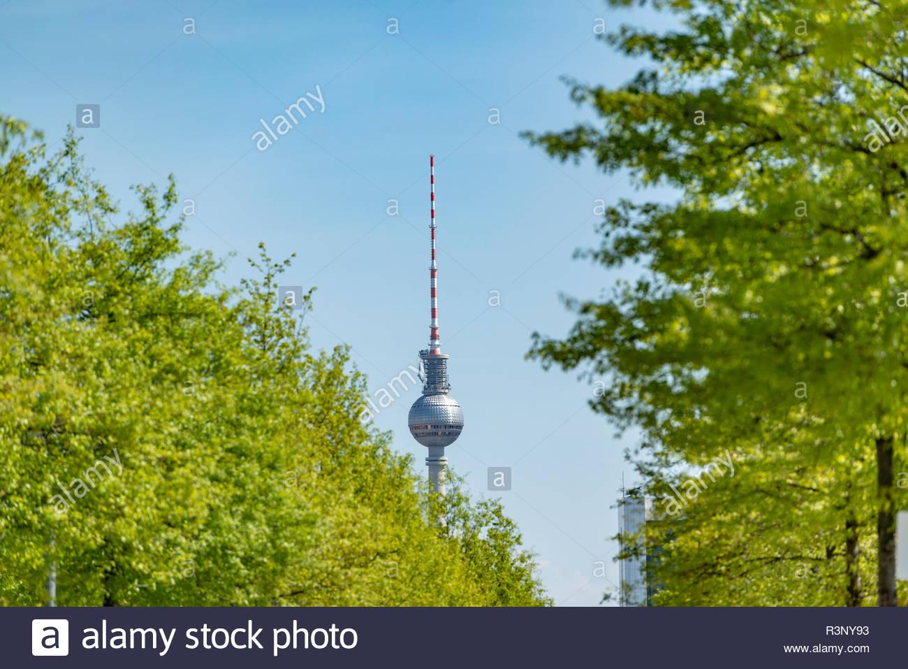 Fernsehturm in Berlin. Im Vordergrund befindet sich eine Allee Stock Photo