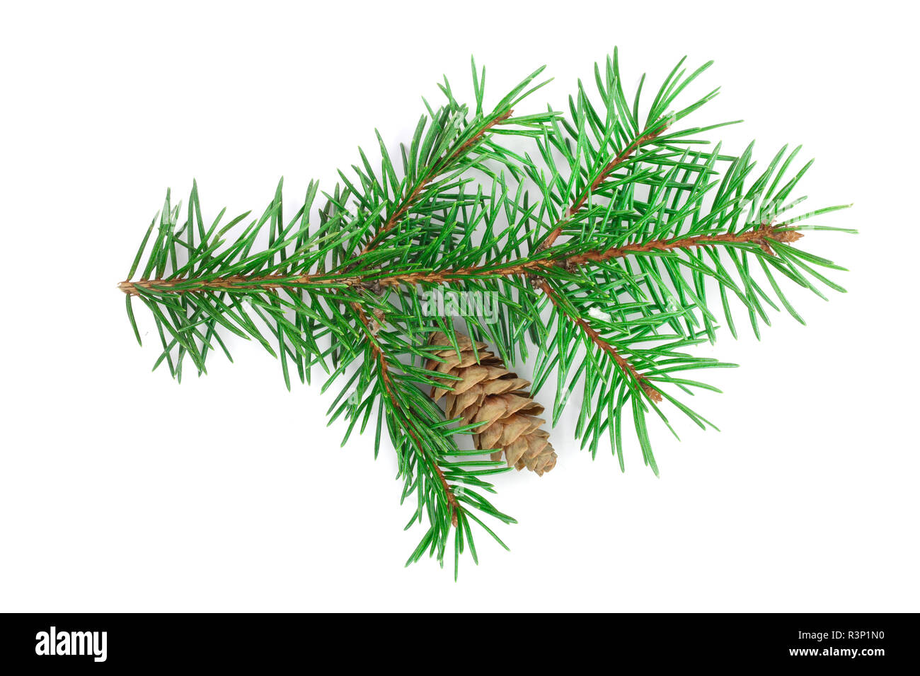 Fir tree branch with cone isolated on a white background close-up. Top view - Stock Image