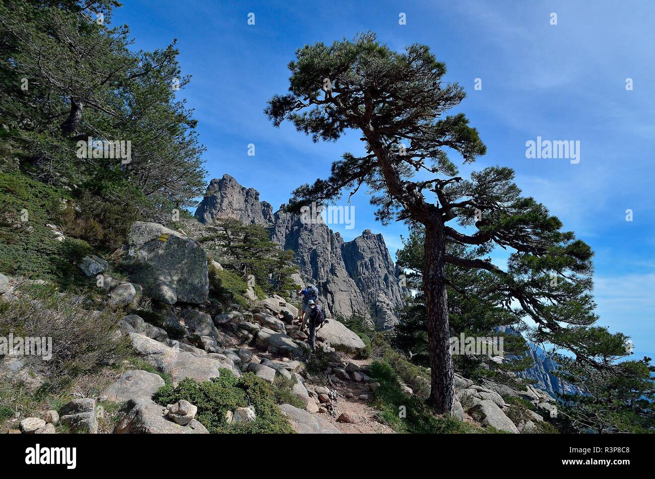 Hiking on the GR20 towards the Bavella Needles, Alta-Rocca Region, Corsica, France - Stock Image