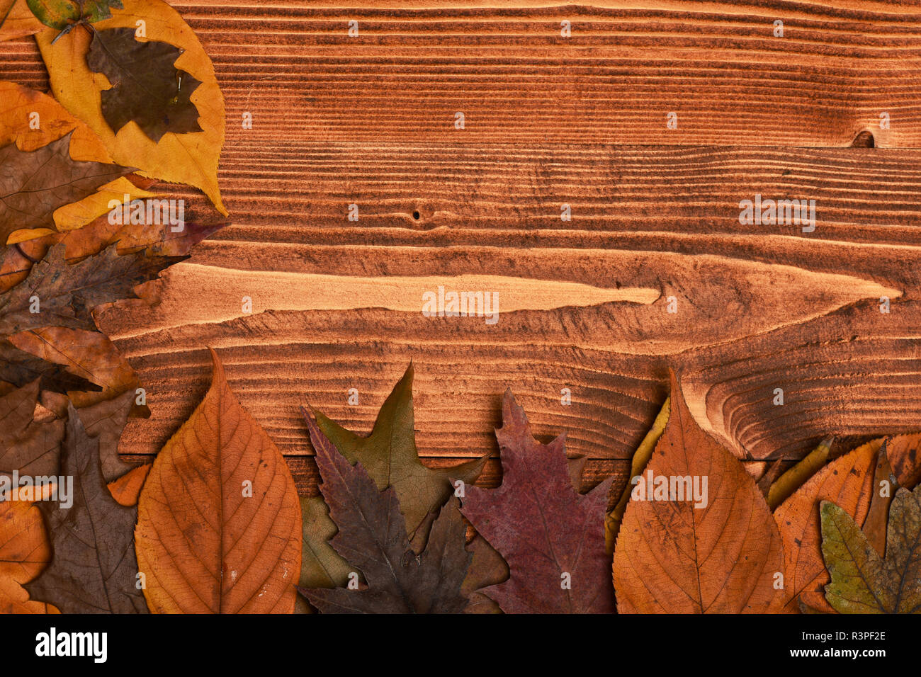 Dry leaves placed in angle with copy space  Maple, oak and