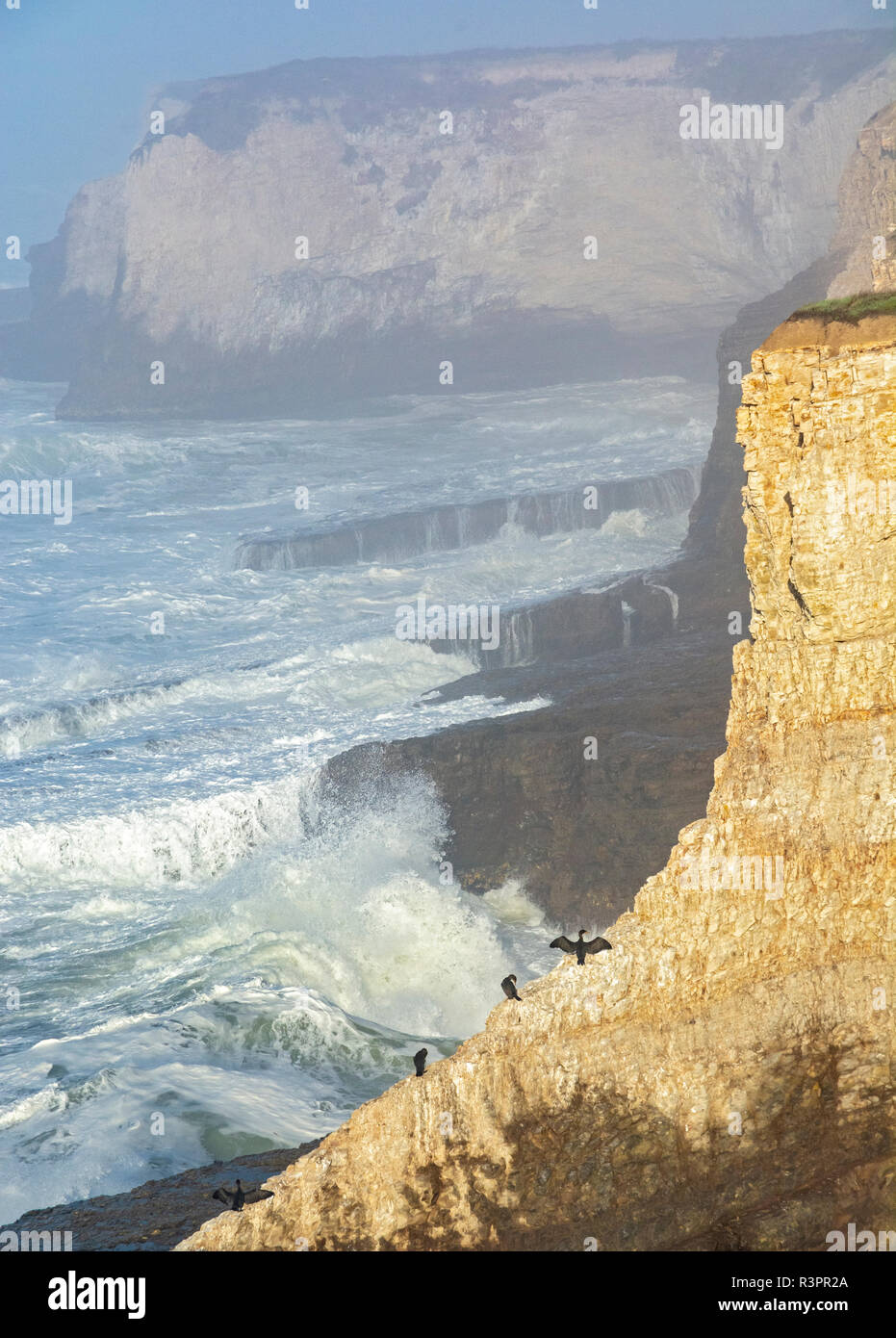 California, Santa Cruz County, Pacific Ocean Coast, sea birds on cliff, surf Stock Photo