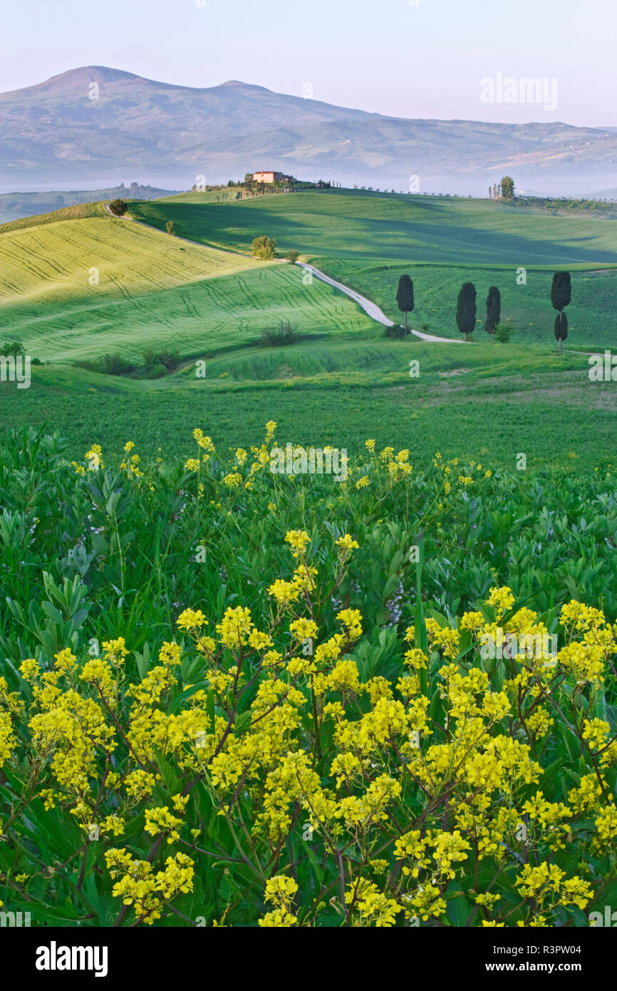 Italy, Tuscany. Landscape with villa. Credit as: Dennis Flaherty / Jaynes Gallery / DanitaDelimont. com - Stock Image
