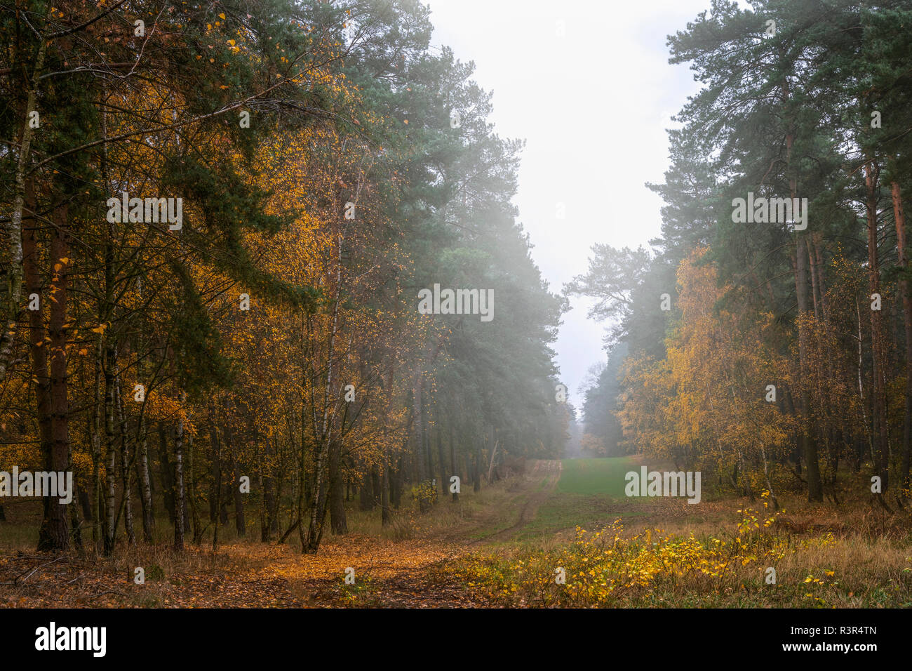 Wooded area, countryside of Brandenburg - Stock Image