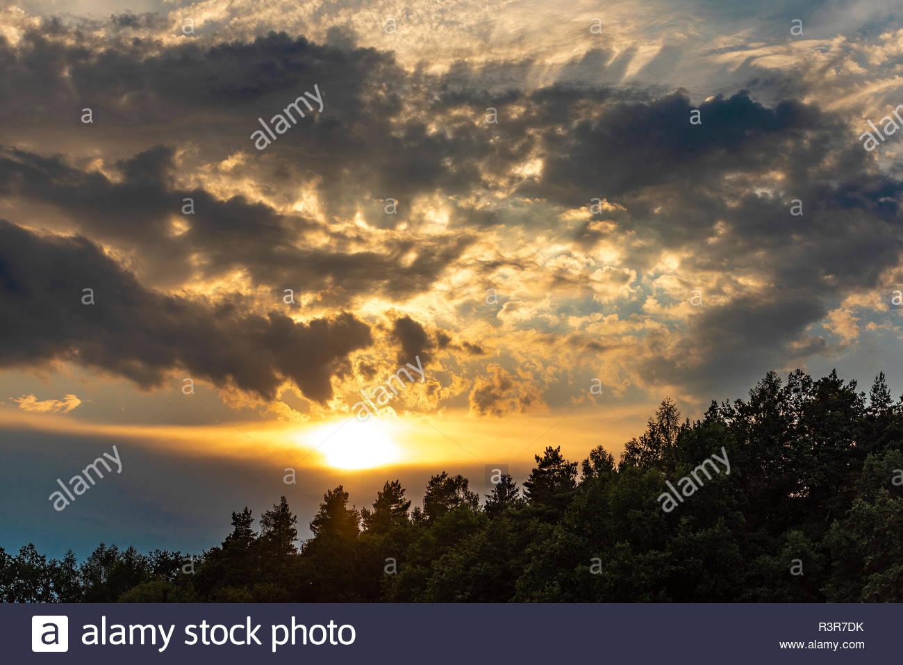 Sonnenuntergang über dem Wald - Stock Image