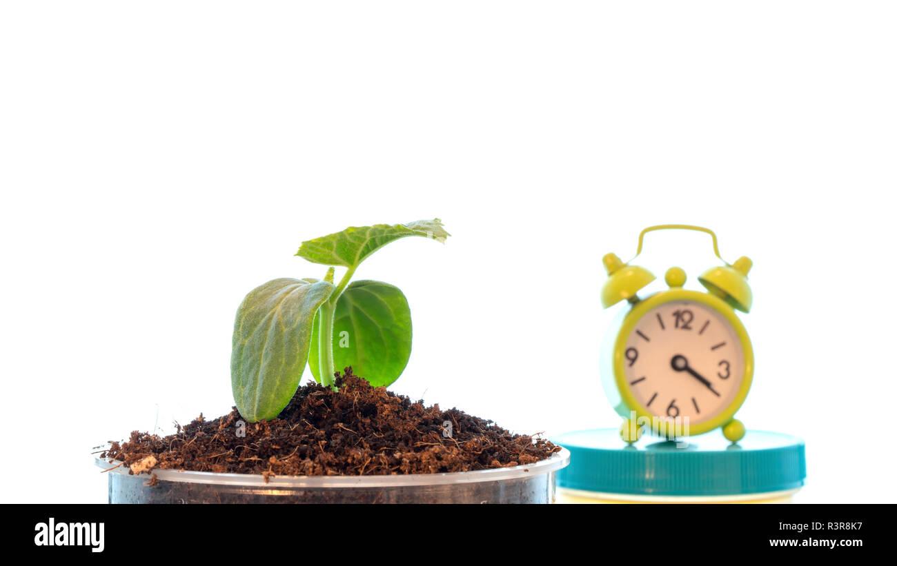 Plant and alarm clock. - Stock Image