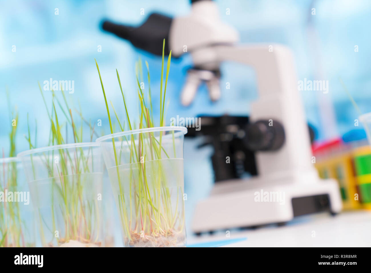 Agriculture research, conceptual image. Stock Photo